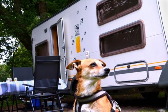 Hund Wohnwagen Geversduin