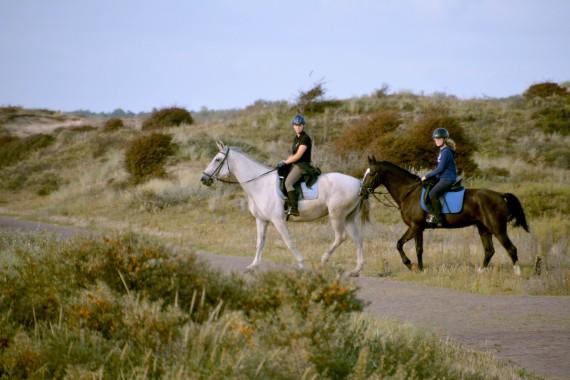 Dünenritt Pferde reiten