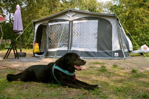 hund wohnwagen campingplatz camping geversduin holland