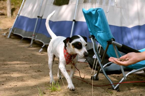 Hund Essen Hand Zelt