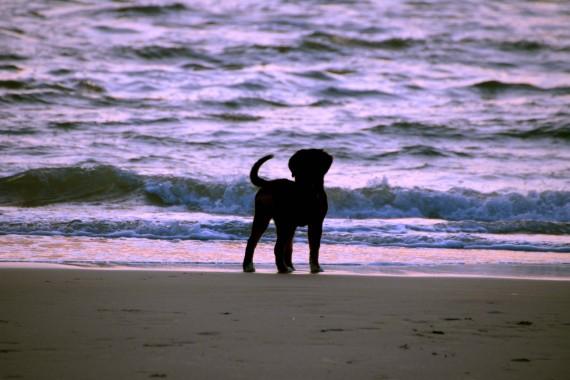Hund sonennuntergang strand meer