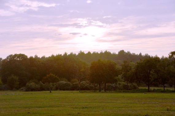 Dünen bäume sonnenuntergang