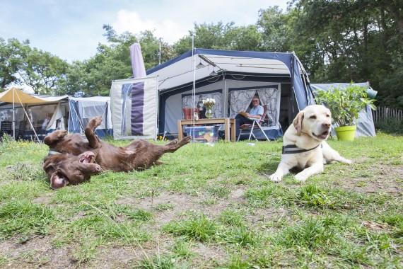 Hunde Wohnwagen Geversduin