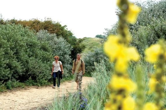 wandern kennemerland dünenreservat blumen