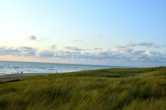 dünen meer strand egmond